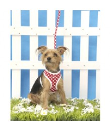 Red Dotty Harness